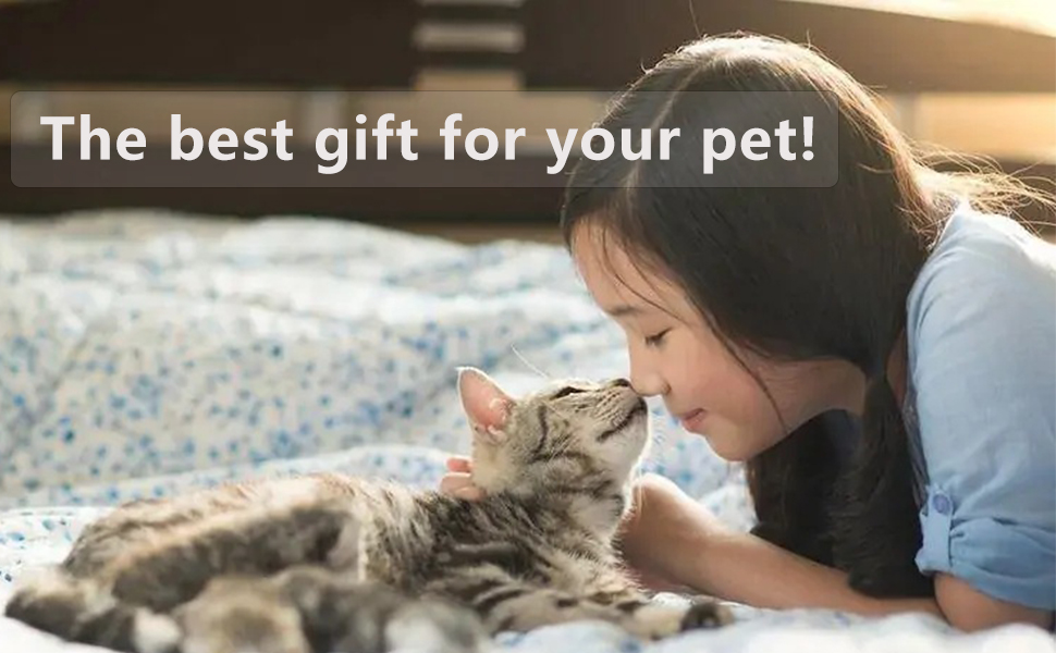 gift for cat