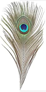 Peacock Eye Feathers 10-12 inch