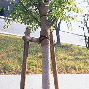 棕梠縄イメージ