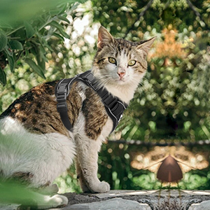 small cat harness