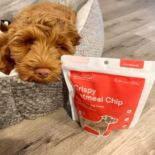 Our cute pup with our Crispy Oatmeal Chip treats.