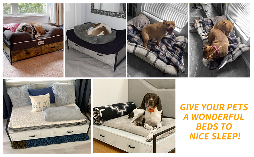 dogs cats home house