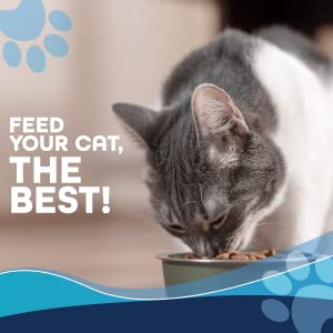 gray and white cat eating from bowl, the letters Feed Your Cat, The Best on the left