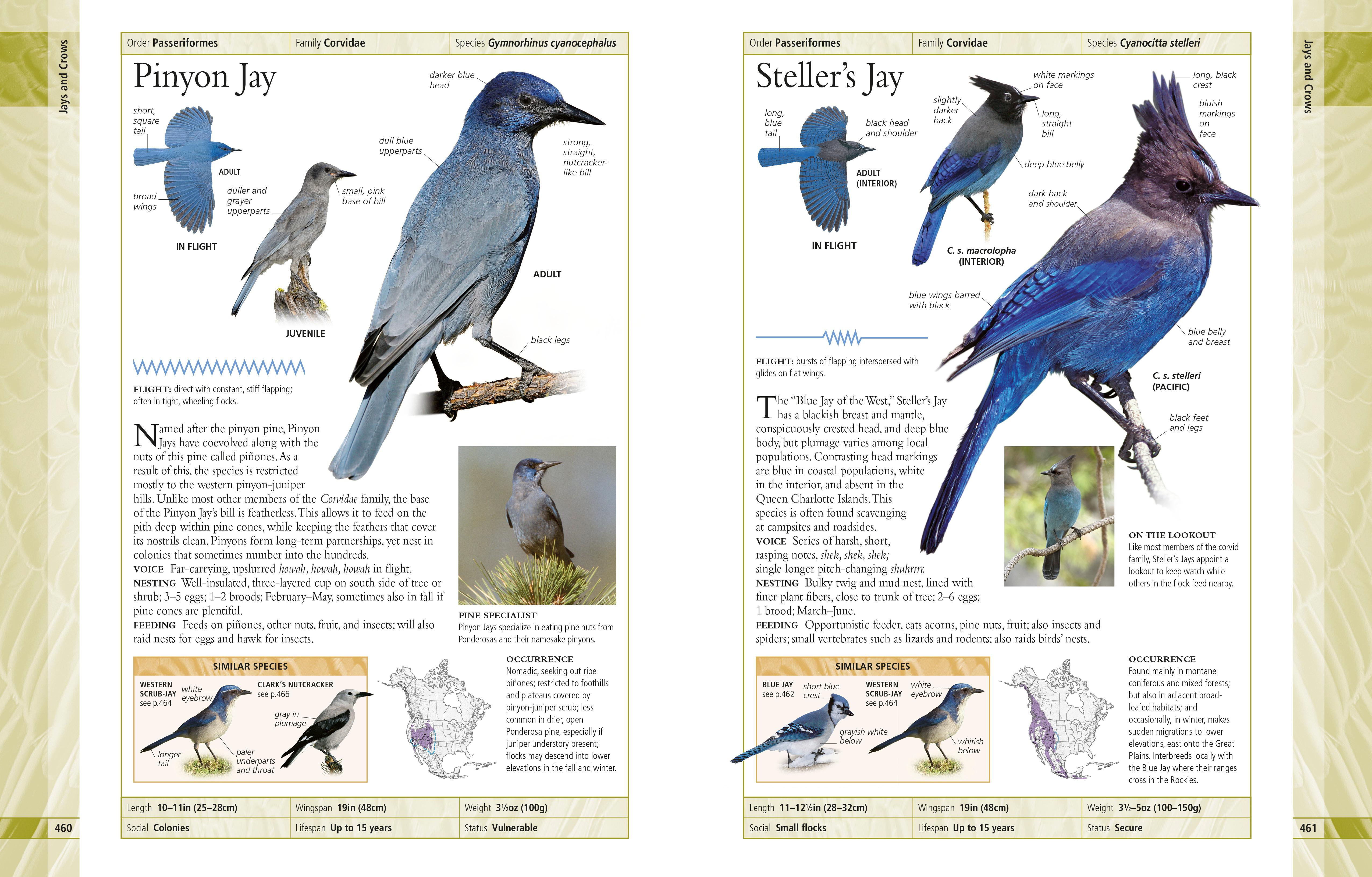 American Museum of Natural History Birds of North America: Paul D ...