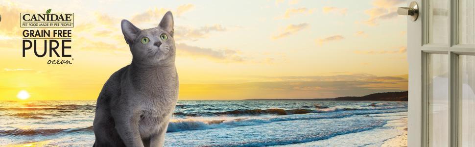 Canidae Cat Food Amazon