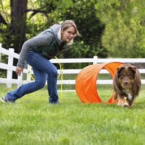 Amazon.com : Outward Hound ZipZoom Outdoor Dog Agility ...