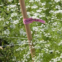 Amazon Com Velcro Brand One Wrap Garden Ties Plant