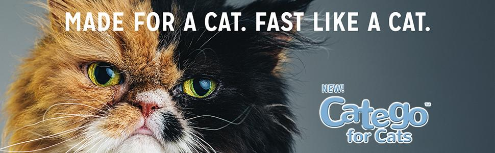 cat fleas, Frontline plus for cats, advantage II, my cat has fleas,