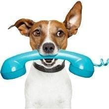 Dog Training, Smartphone; Training Solution