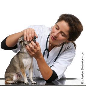 dog dental, canine health, nylabone dental