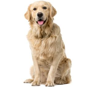 dog food,natural dog food,grain free canned dog food,grain free dog food,dog food grain free
