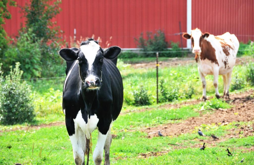 KILZ Exterior Siding, Fence, and Barn Paint, Red, 1-gallon ...