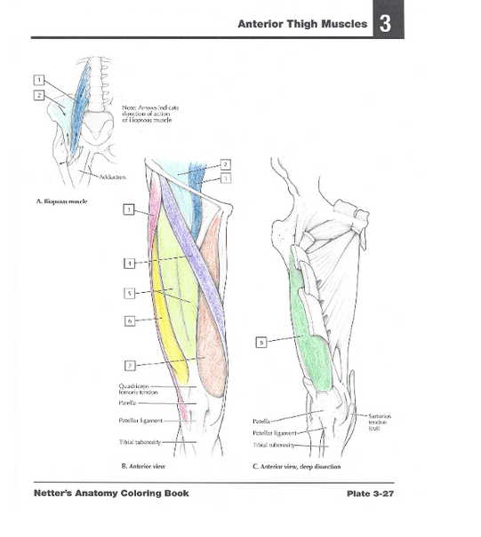 Netters Anatomy Coloring Book With Student Consult Access John T
