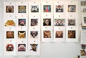 animals, photographs, subjects, studio