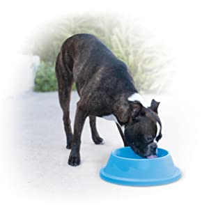 dog,puppy,outdoor,water,bowl,cool,freeze,ice,frosty,chill,pet,polar
