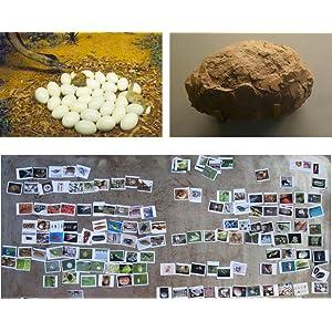 Photographs, Egg, Steve Jenkins