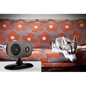 Motorola Pet SCOUT Wi-Fi HD Pet Monitorint Camera
