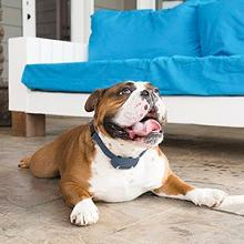 Dog Training; Trainer; Training Solution