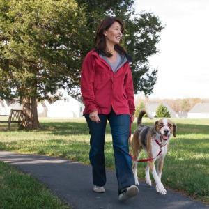 how to stop a dog lunging on the lead
