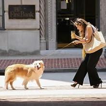 pulling walking dog walks
