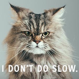 cat fleas, flea and tick for cats, frontline plus, advantage II for cats, best flea medicine for cat