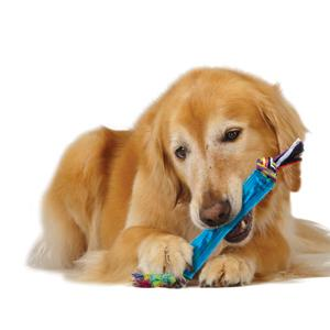 fun durable chews for dogs
