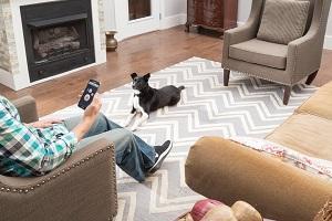 SMART DOG Trainer; Dog Trainer; Smartphone