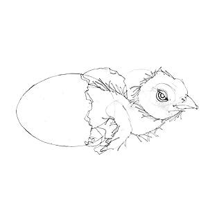 Bird sketch, Steve Jenkins, Children''s Book