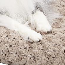Paw Pleasing Detail