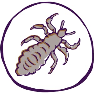 lice, nits, eggs, dandruff, glue, infest, affordable, quality, natural, parents, calm