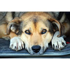 dog claws,