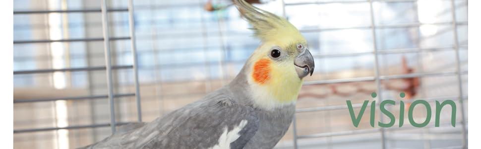 amazon com vision bird cage model l01 large pet supplies