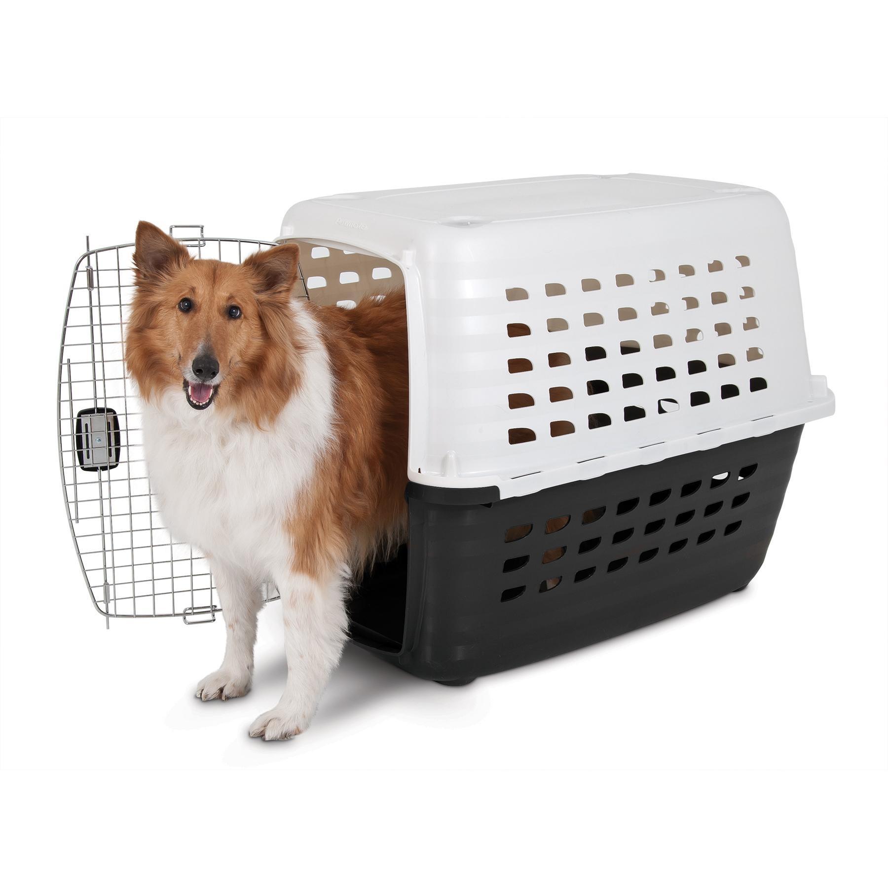 Amazon Petmate Compass Kennel Pet Carrier Pet Supplies