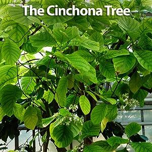 Hyland's, leg cramps pills, quinine, natural, cinchona tree, leg cramp pain