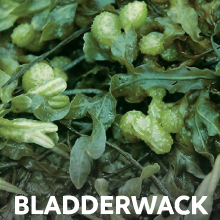 Bladderwack