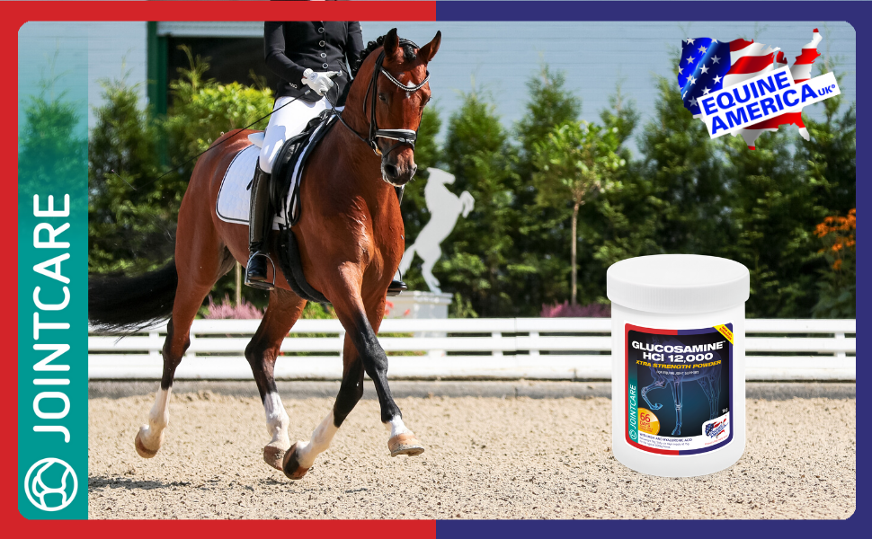 Equine America Glucosamine Hci 12000 Premium Ready To Use Horse Pony Supplement Support For Joints Mobility 1kg Amazon Co Uk Pet Supplies