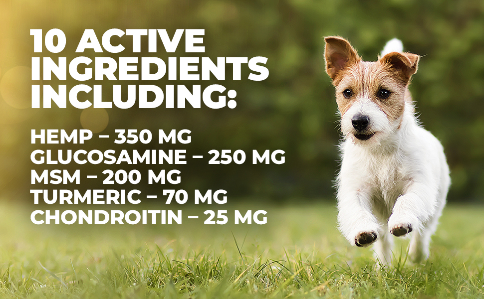 glucosamine for dogs; joint care chews; dog joint health; hip and joint supplement, mighty petz