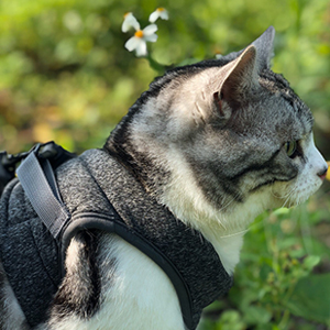 cat harness escape proof kitten harness and leash set cat collars leashes kitten harnesses