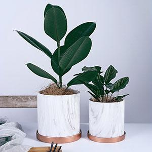 plant-pot flower-pot marble garden home decoration household white tray aloe-vera cactus Indoor