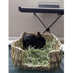 Portable Bunny Grass Bed