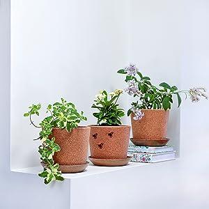 Set of three cork plant flower succulent herb planters on shelf ledge display
