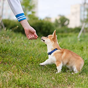 tasty dog multivitamin q10 puppy healthy coat coenzyme diet nutrition hair strength happy wellbeing