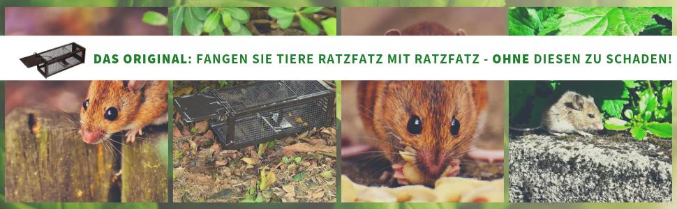 lebendfalle falle mäusefalle maus schädlingsbekämpfung rattenfalle