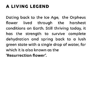 ORPHEUS FLOWER ICE AGE BOTANICAL RESURRECTION FLOWER