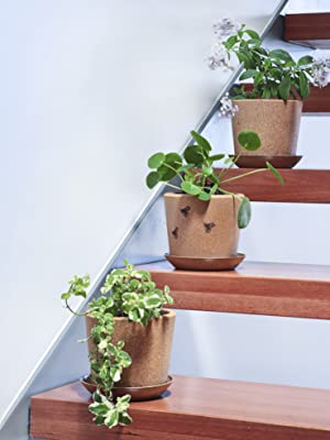 three cork plant pots  with rice hull saucers upstairs trailing herb flower pilea plants