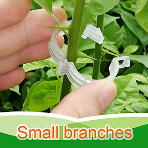 plant support clips