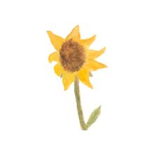 organic sunflower oil vitamin e anti aging wrinkle soap bar