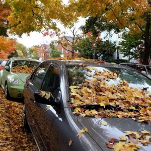 sedan cover against fallen leaves