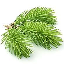 Pine Fir