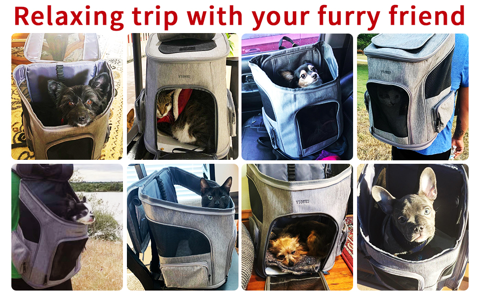 Relaxing trip with your furry friend